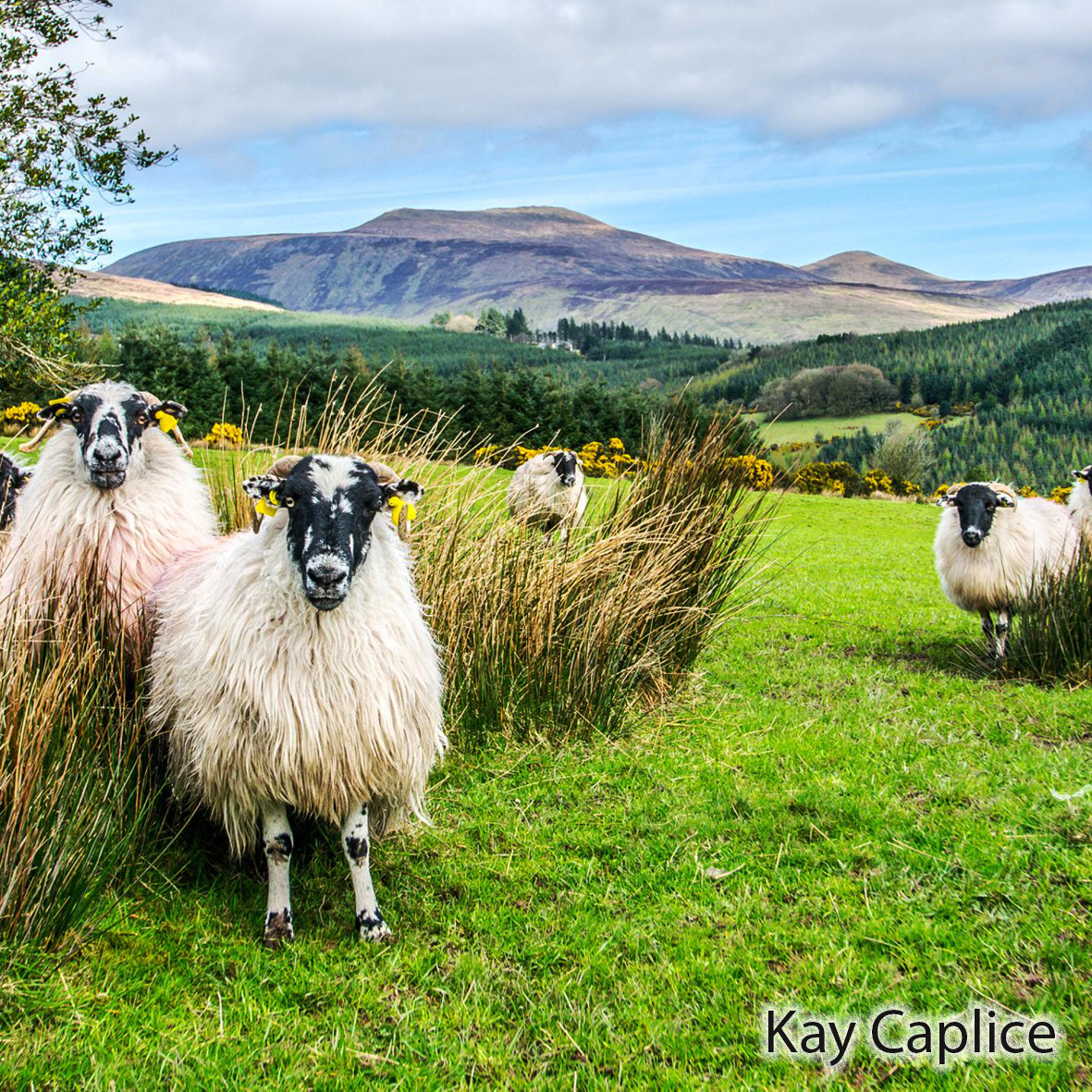 Read more about the article Galtee Map of Year Award